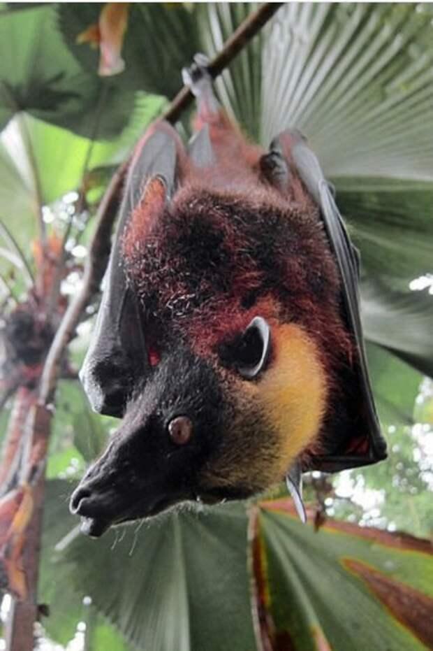 Невероятные и малоизвестные факты о летучих мышах