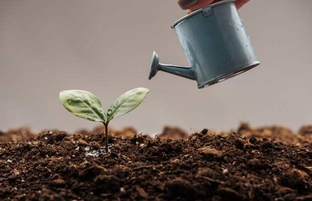 Процесс оскотинивания в США, или Покойников на компост