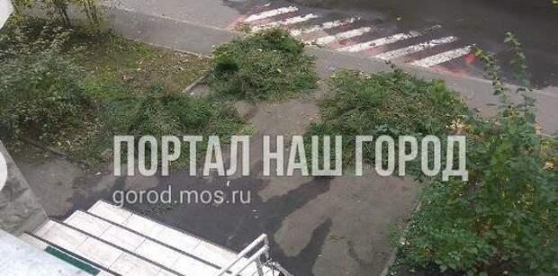 С улицы Маршала Тухачевского вывезли еловые ветки