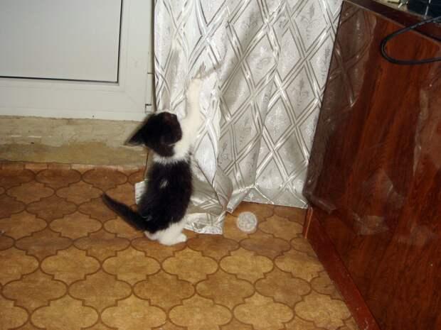 Парень вышел за хлебом, а вернулся с котёнком. Он не смог пройти мимо голубоглазого крохи, сидящего в урне под магазином
