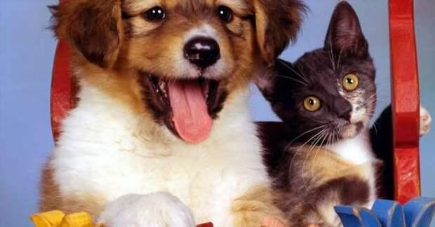 Прикольные фотографии котиков. Кити кити юмор. Подборка milayaya-cat-milayaya-cat-33220320102020-11 картинка milayaya-cat-33220320102020-11