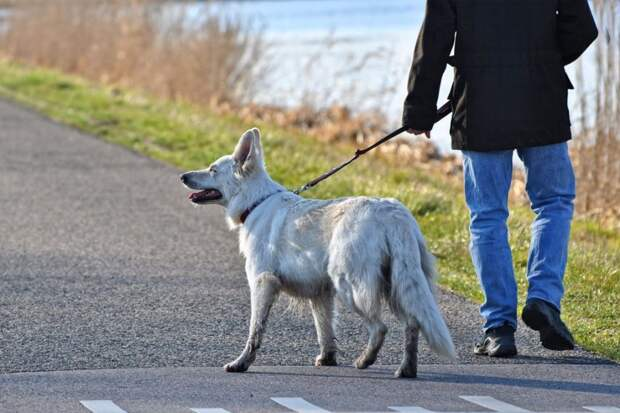 В США мужчина выгулял собаку и умер от чумы