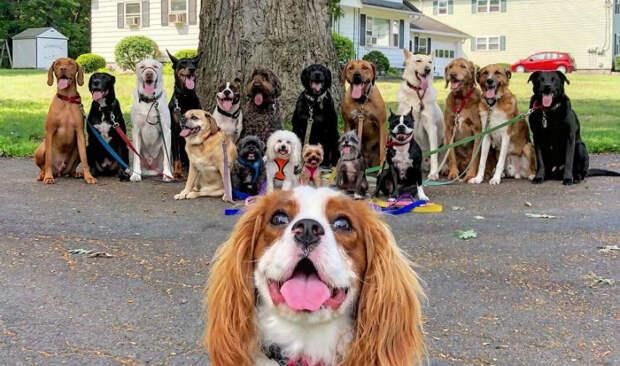 Парень, выгуливающий по 15 собак в стае, делает невероятные фото своих подопечных