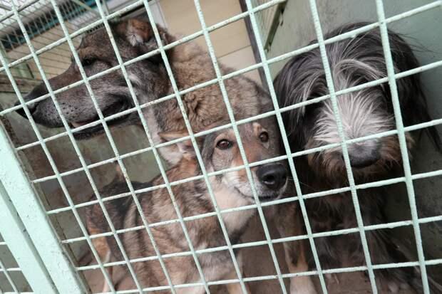В Госдуме предложили отпускать животных из приютов на волю после вакцинации