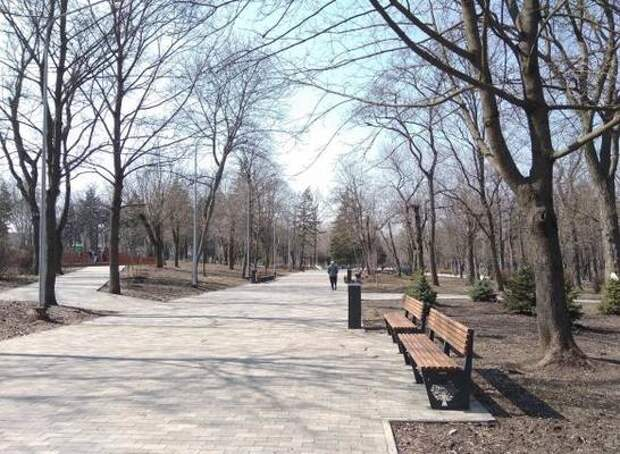 Установить роллердром и высадить новые деревья планируют в парке им. Собино Ростова