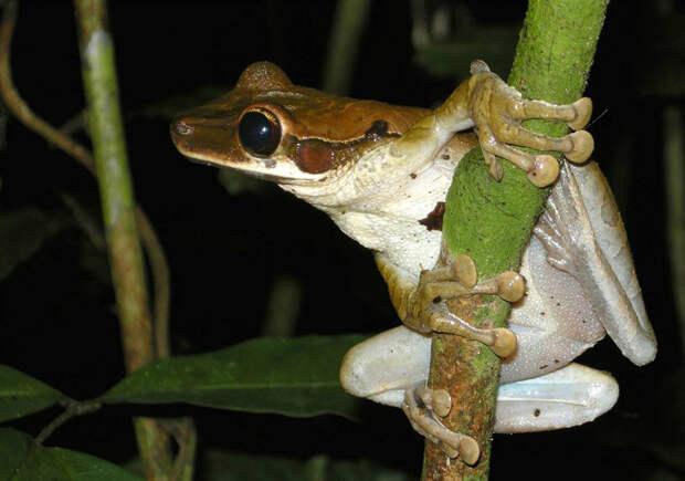 Фауна Амазонки: новые виды