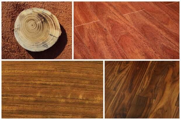 Самые твердые породы дерева деревья, древесина, интересное, природа, факты