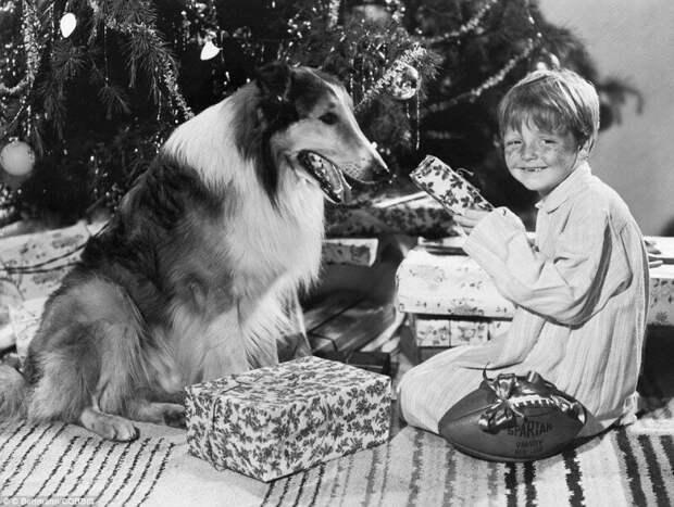 Бутч Дженкинс и собака-кинозведза Лэсси отмечают Новый год, 1947 г. ретро фото, фотт, это интересно