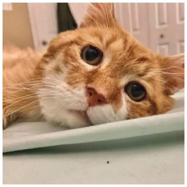 История грустного трехлапого кота: питомец спустя 8 лет вернулся к дому старого хозяина