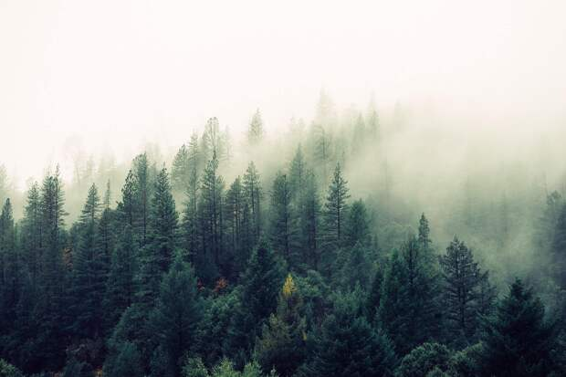 Когда горит лес…