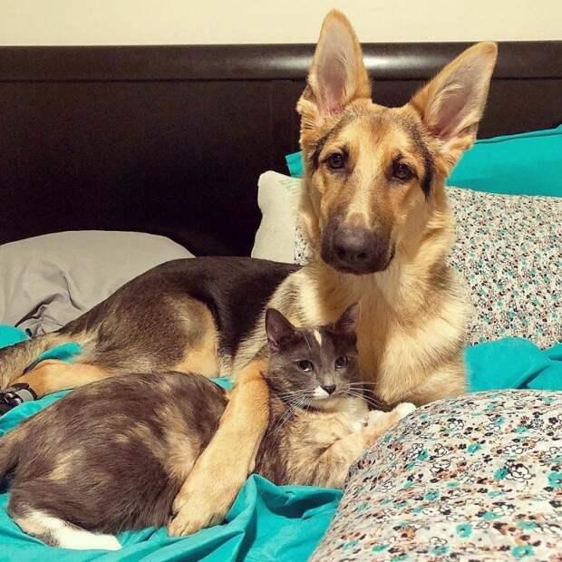 Щенок отказывался отпускать котенка, которого спасли хозяева дружба животных, истории спасения, история спасения, кошки, собаки, спасение животных