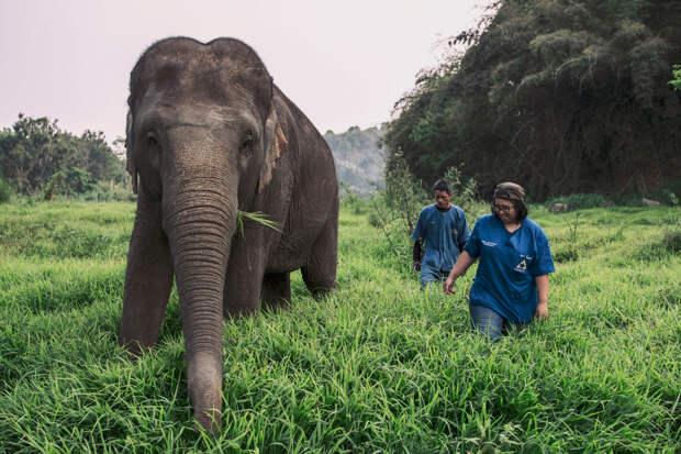 Тайцы устроили видеоконференции со слонами