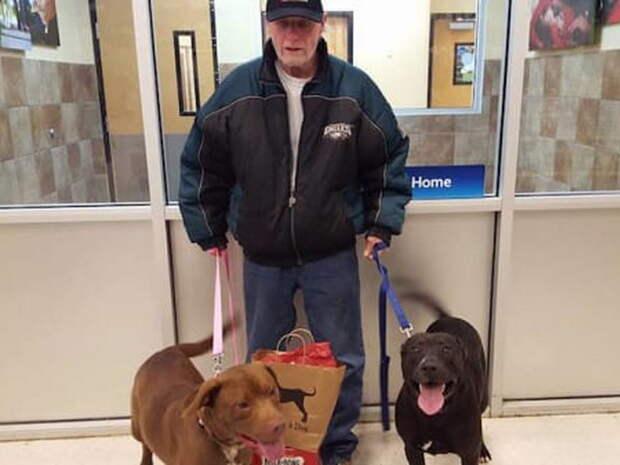 Собаки ждали хозяина в приюте, но ветеран не мог найти деньги, чтобы выкупить их