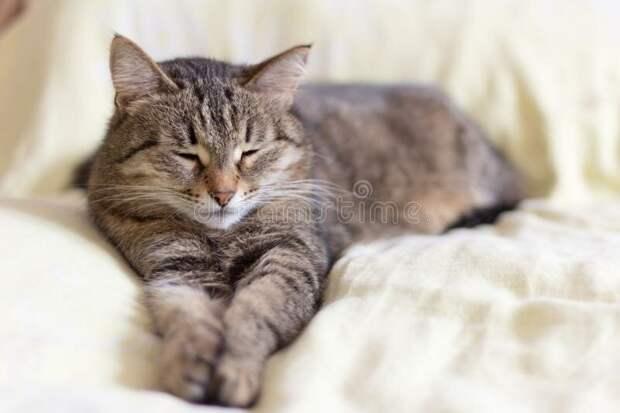 Жизнь с котом, или как не сойти с ума от одиночества.2