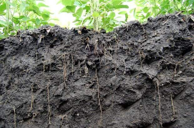 Thin and long roots mean good soil and better yield
