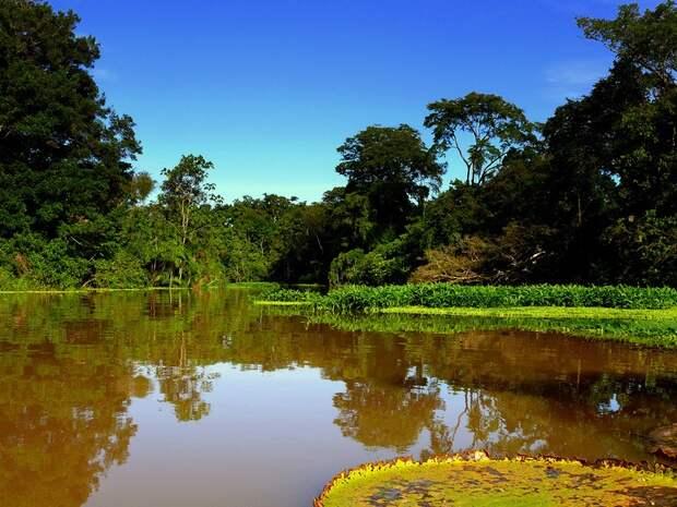 Amazonas17 Большое фотопутешествие по лесам Амазонки