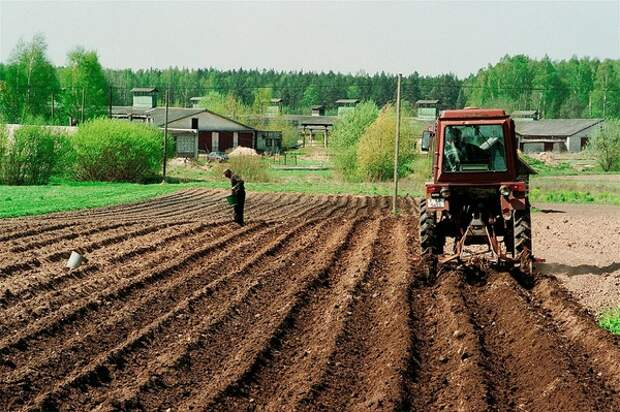 Придется секреты консервации вспоминать самим: на полях и заводах не хватает мигрантов