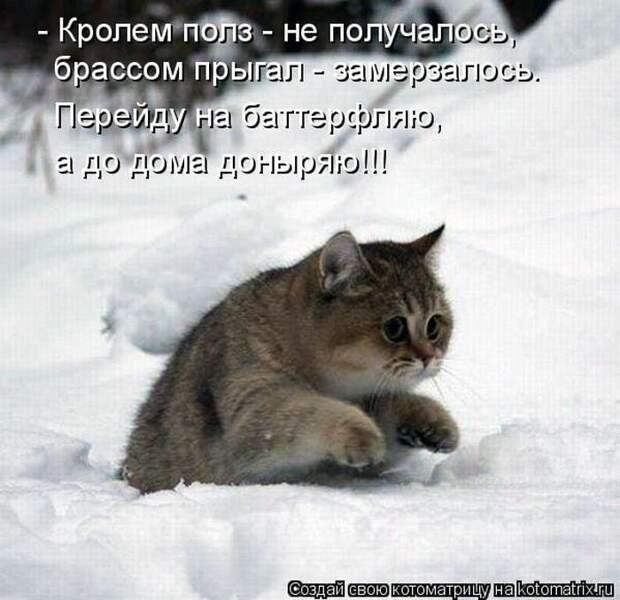 Возможно, это изображение (кот и текст «-кролем полз не получалось, брассом прыгал- замерзалось. перейду на баттерфляю, a до дома доныряю!!! создай свою котоматрицу Hakotomatrix.ru»)
