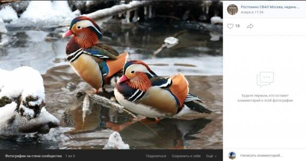 Фото дня: на Яузе обнаружили редких уток