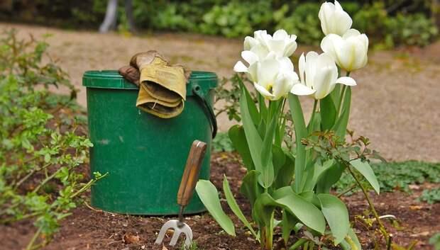 Онлайн‑встреча с садоводами и дачниками Подмосковья пройдет в пятницу