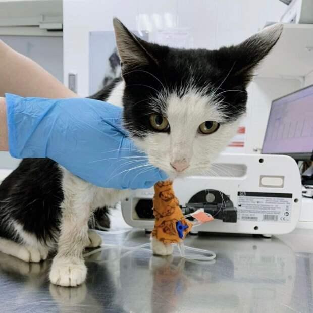 Жители округа собрали  тысячи рублей на лечение бездомной кошки