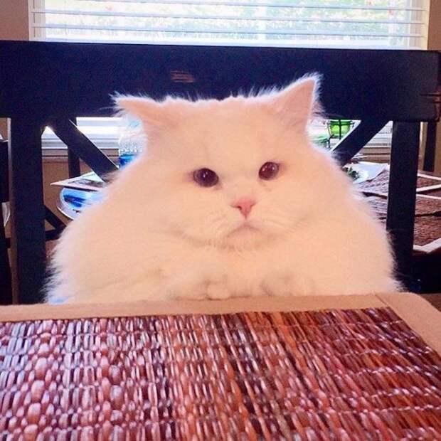 30 восхитительных котов, харизме которых невозможно сопротивляться