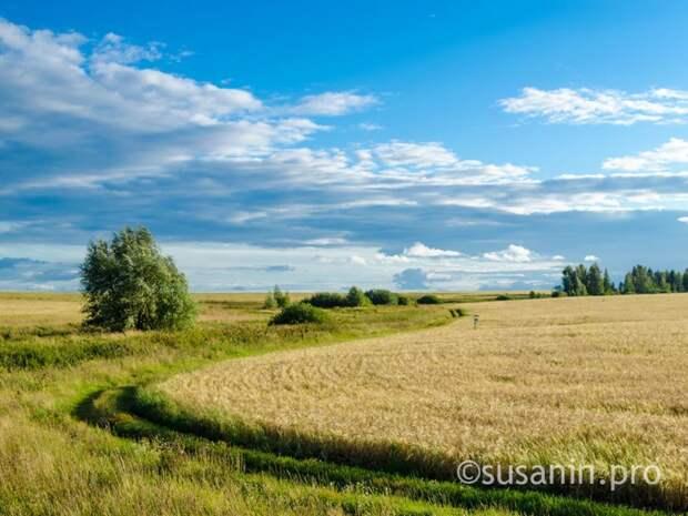 В 2021 году посевные площади в Удмуртии увеличатся на 10 тыс гектаров
