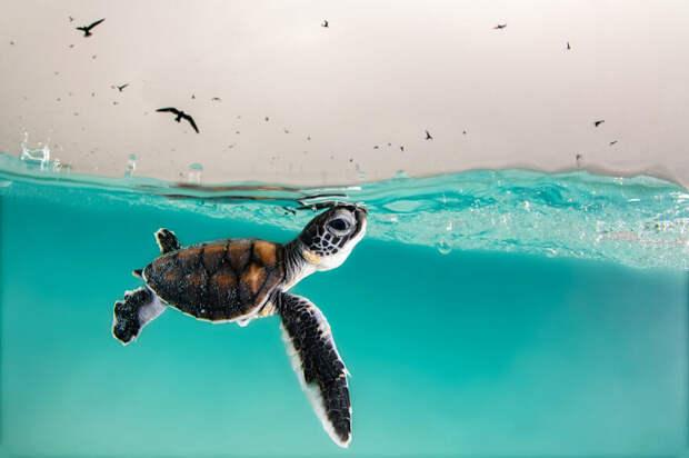 10 удивительных подводных снимков от финалистов конкурса Ocean Photography Awards 2021