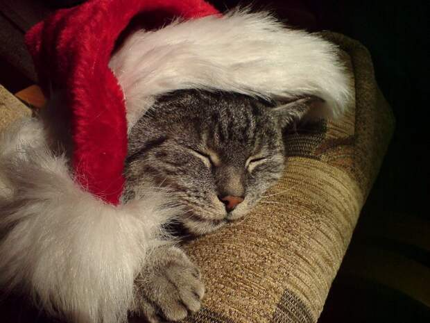 3166706_Christmas_cat_by_cecilla (700x525, 85Kb)