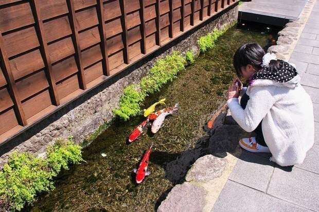 Японский город, в котором вода настолько чистая, что в водостоках живут карпы