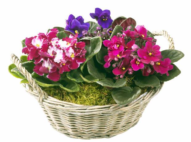 flowers-fialka-2 (600x449, 201Kb)