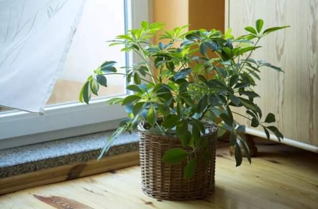 15 комнатных растений, которые выживут даже у самого занятого человека