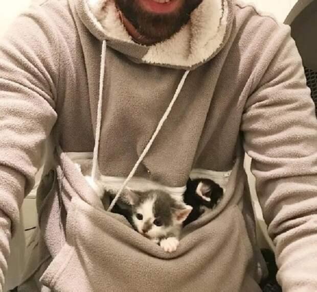 Котята в кармане