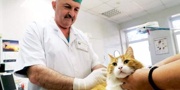 Вакцинация собак и кошек от бешенства пройдет на 9-й Северной линии Фото с сайта mos.ru
