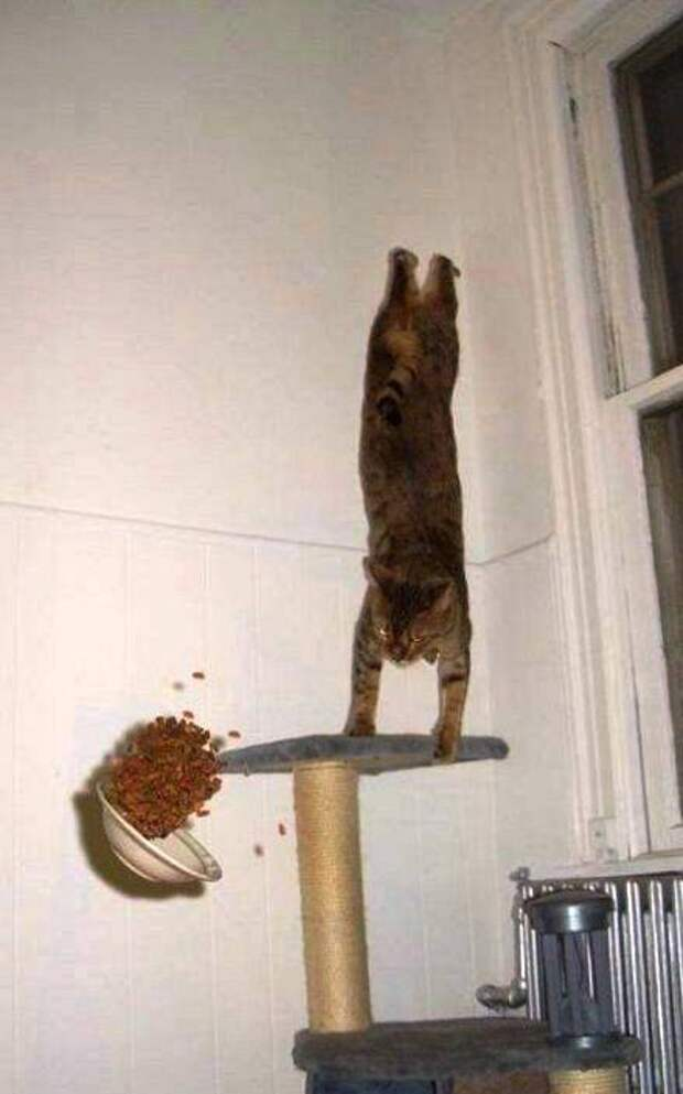 Забавная и милая фото подборка котов-спортсменов