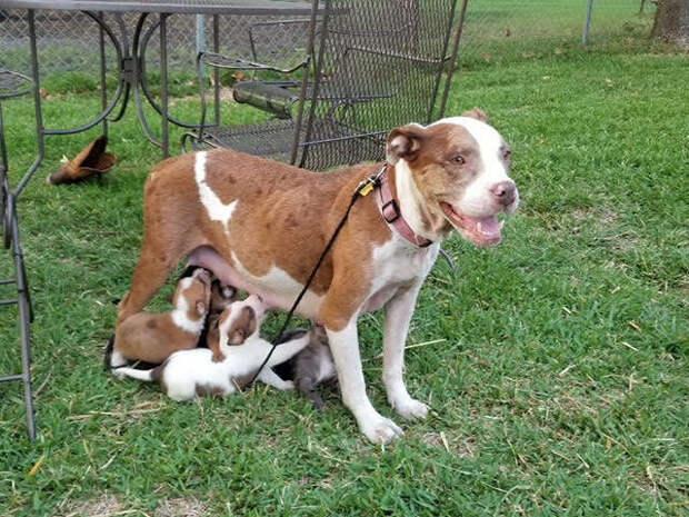 Несчастную собаку выгнали сразу после появления на свет щенков