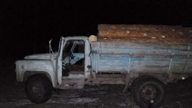 Житель Алтайского края получил условный срок за кражу трех сухостойных сосен