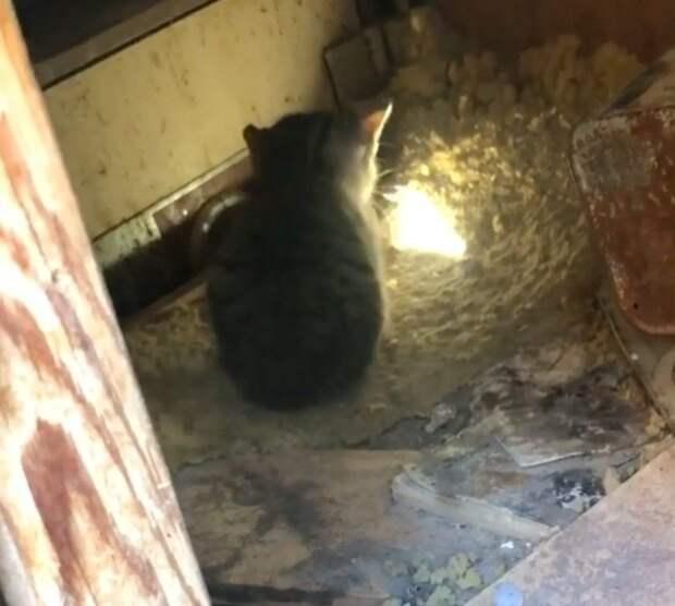 Мужчина два дня вытаскивал котенка из мусорной кучи