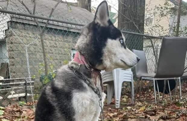 Люди так спешили переехать, что забыли свою собаку