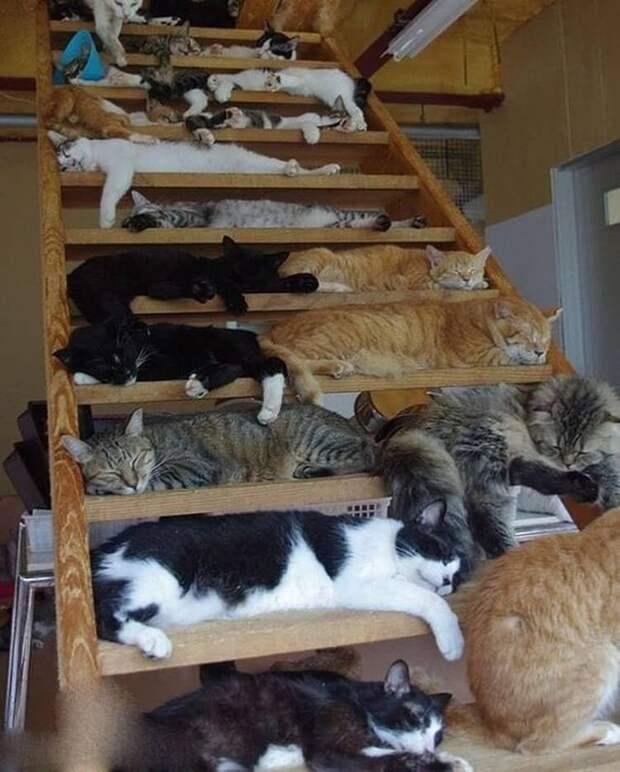 Для сна нет преград: 30 фото котов, которые это доказали