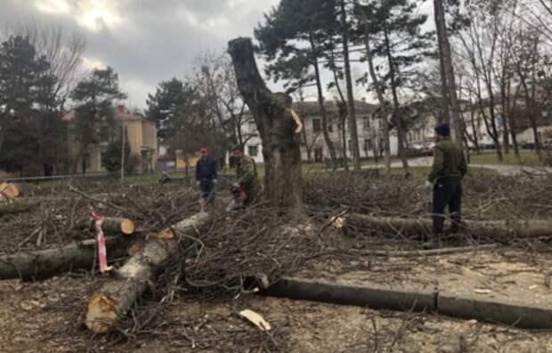 В администрации Симферополя рассказали, зачем срубили деревья в сквере имени Высоцкого