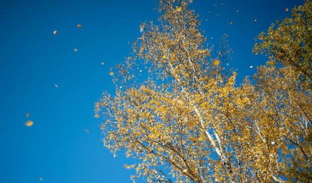 Солнечная погода ожидается вНижнем Новгороде впятницу