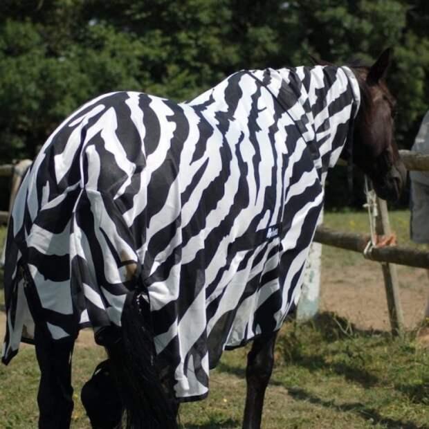 Почему зебры полосатые?
