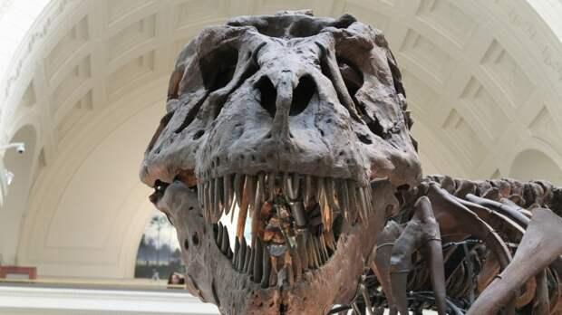 В ФРГ «Северный поток – 2» сравнили с динозавром