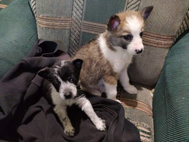 Промокшие под дождем щенки, сидели в коробке посреди леса. Там их нашла девушка