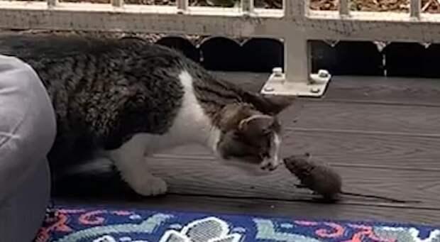 Неправильная кошка. Неправильная мышка. Все неправильно!