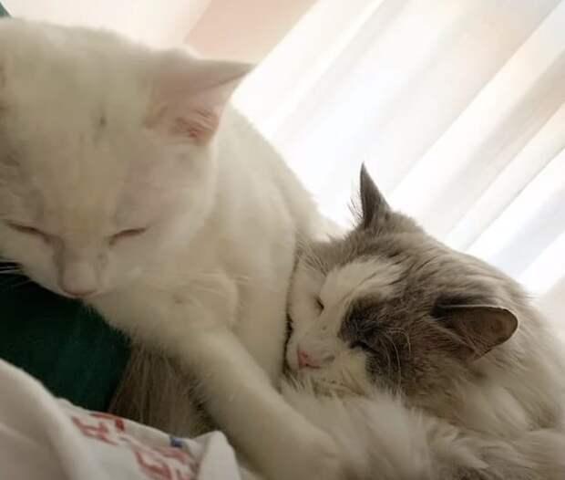 Коты уснули