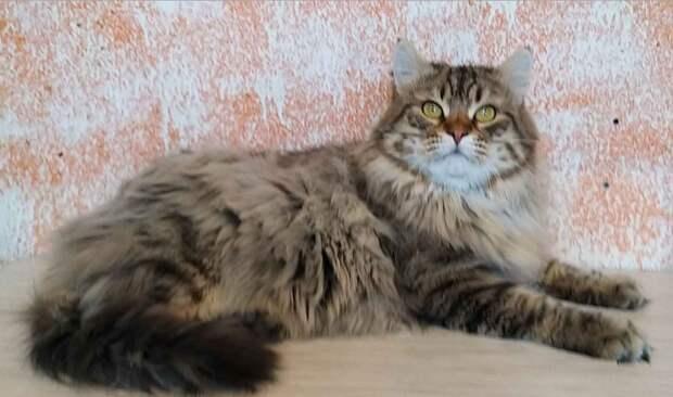 Старик и кот (реальная история)