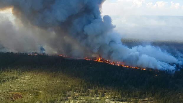 Лесные пожары в России в 2021 году назвали самыми катастрофичными за всю историю