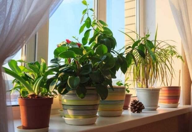 Выбирая комнатные цветы, позаботьтесь о домашних питомцах / Фото: hyser.com.ua
